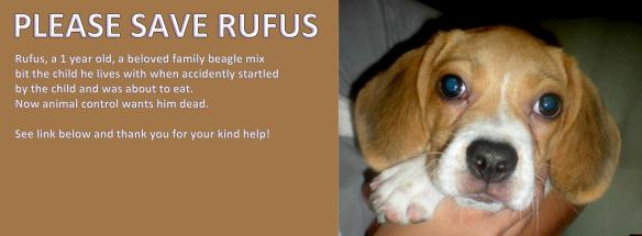 Dr Rex Equality News Team Rufus Beagle Puppy Pending For Euthanasia