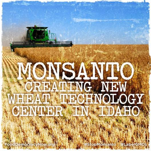 MONSANTO .... headed to Idaho!!