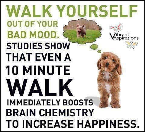 MEDICAL CORNER .... Lose weight by walking!!