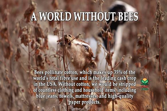 A World without Bees ....