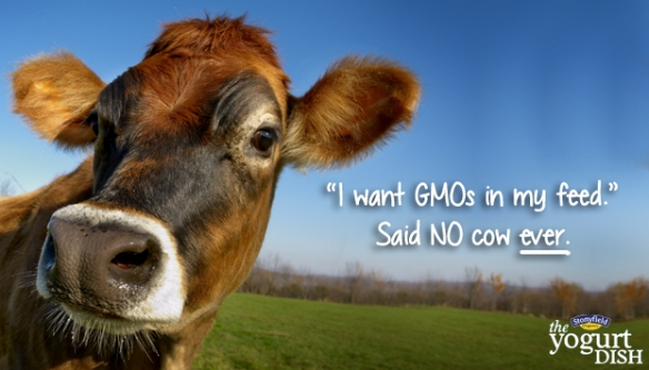 Organic and GMOs don't mix!!