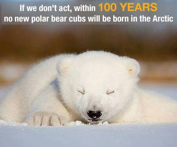 Polar bears .... are in danger!!