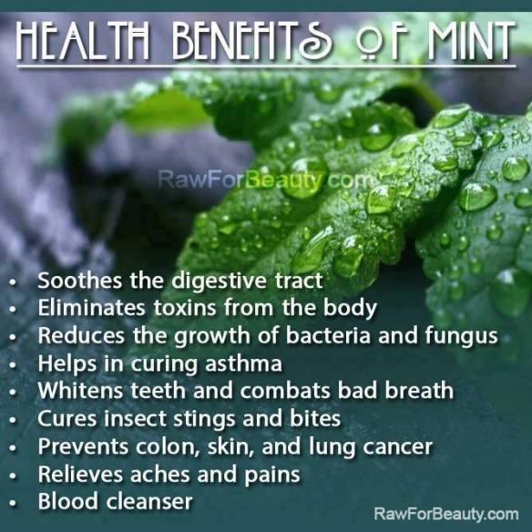 MEDICAL CORNER .... Mint benefits!