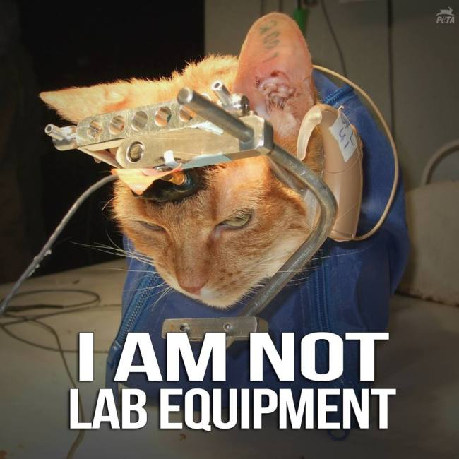 animal experimentation is unnecessary and cruel Report abuse home opinion environment animal testing: inhumane and unnecessary animal suffer through the cruel and inhumane practice of animal testing.