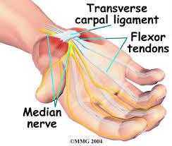 Median Nerve ....