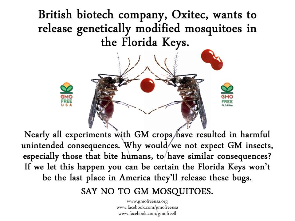 Gm Mosquitoes What Else Will They Come Up With It