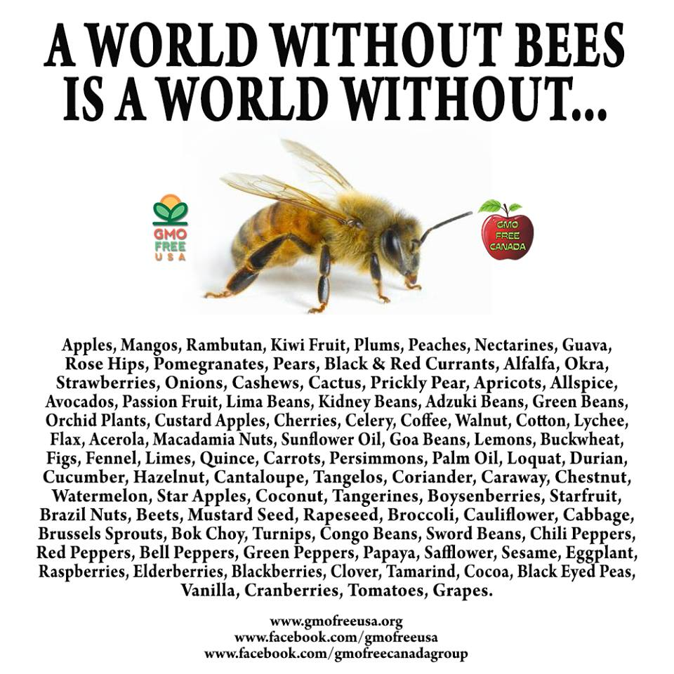 January 9 2014 A WORLD WITHOUT BEES