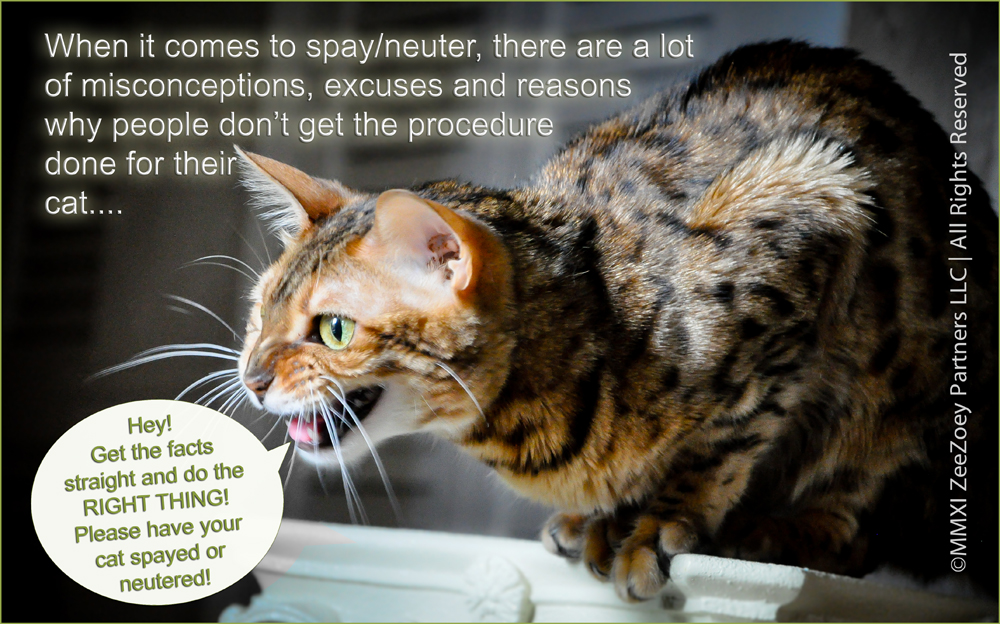 Cats In Heat Can They Be Spayed