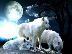 WolfM