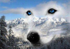 WolfSky