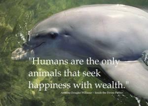 DolphinW