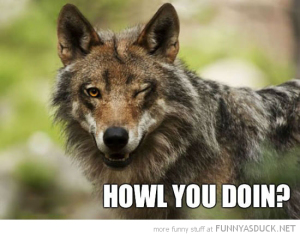 funny-ridiciulously-photogenic-wolf-wink-howl-you-doing-pics