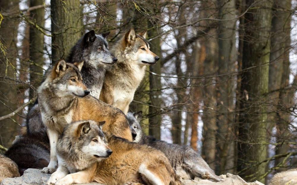 Wolf Spirit Totem ..... symbolism! (3/6)