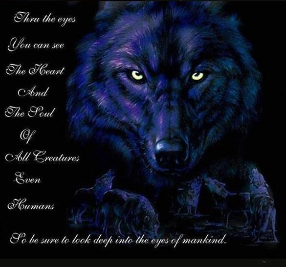 Wolf Spirit Totem Symbolism It Is What It Is