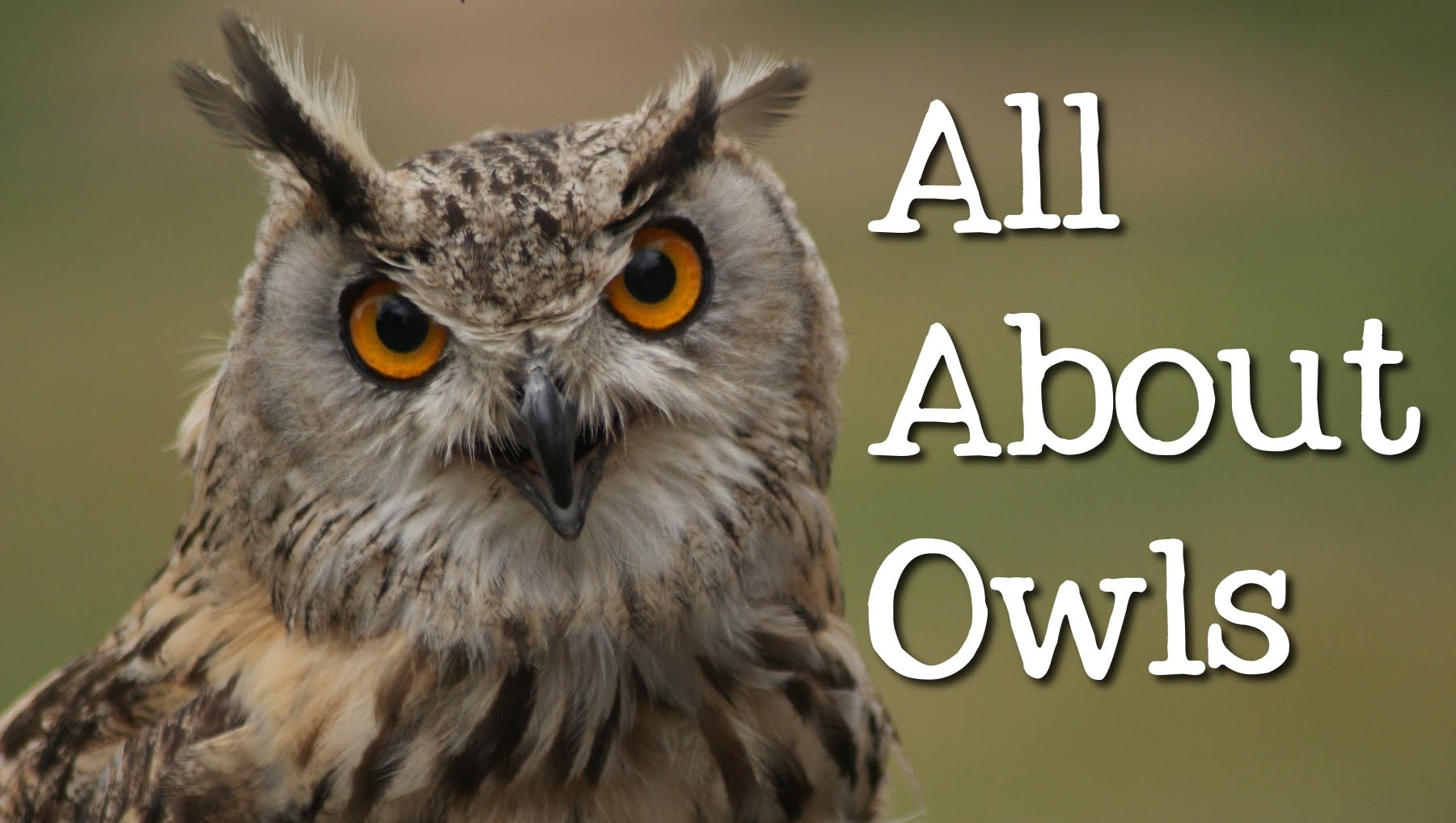 The Owl And Its Many Meanings It Is What It Is