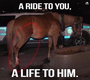 HorseCarriage