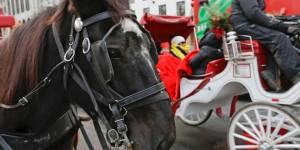 Horse Carriage Politics