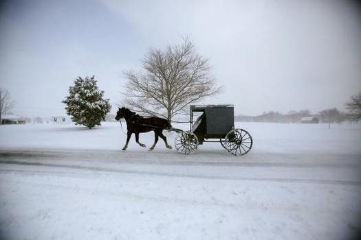 From Buggy to Limousine, My Life as a Horse in Delaware