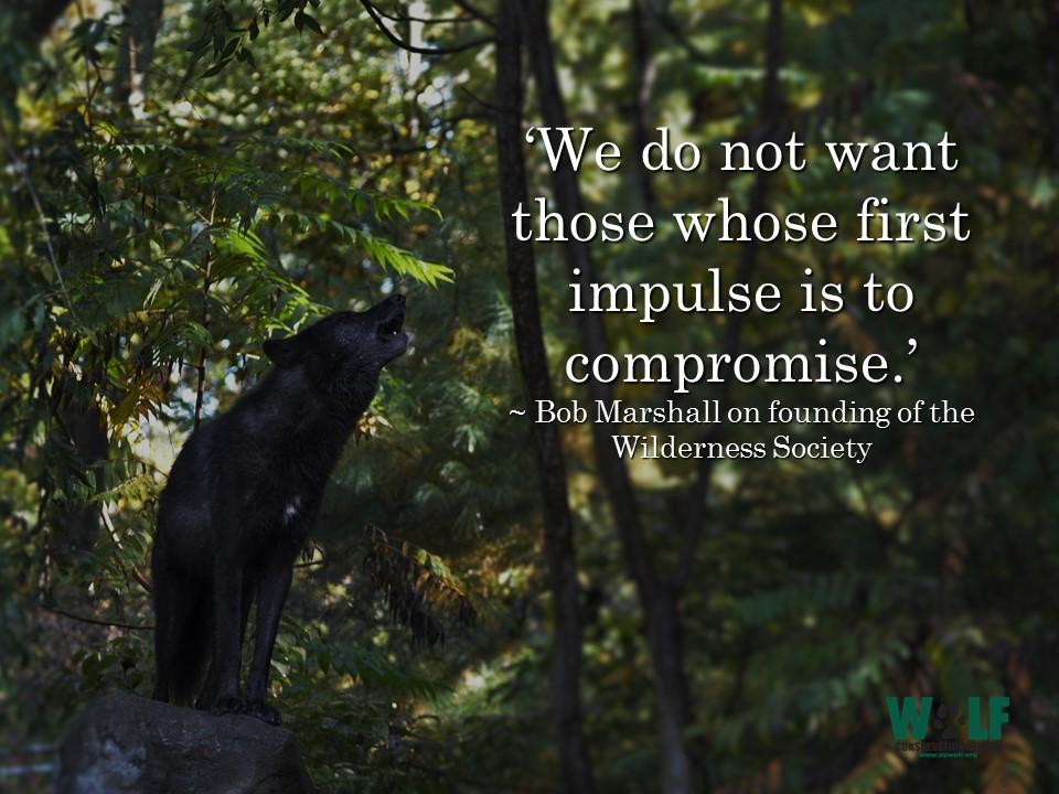 Wolf protecting human