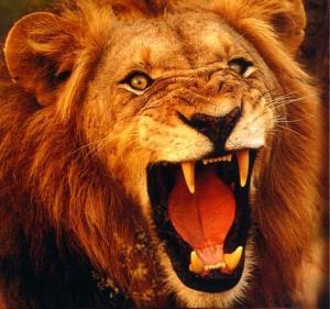 growling_lion-16873
