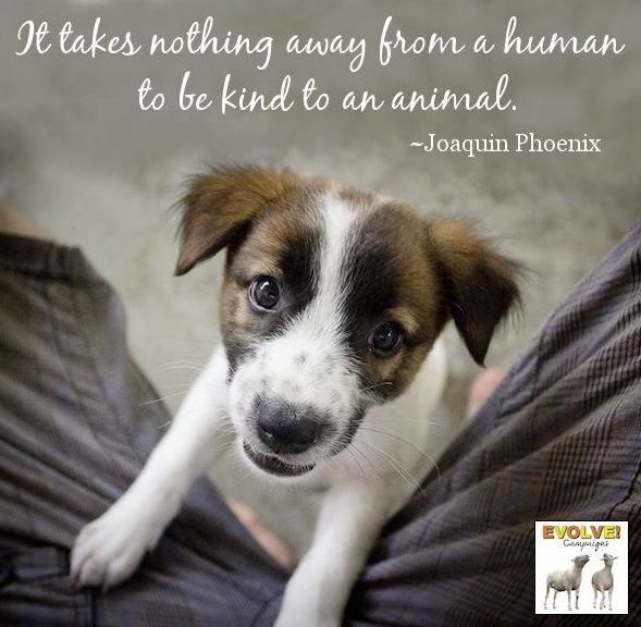 Acts Of Kindness To Animals Quotes