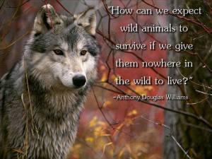 WolfW