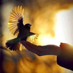 BirdLight