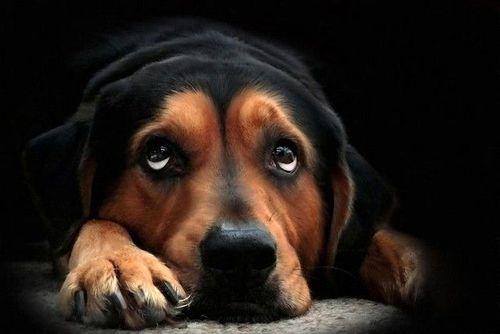 dog,sleepy,sigh