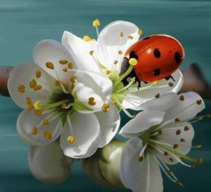FlowerLadyRed