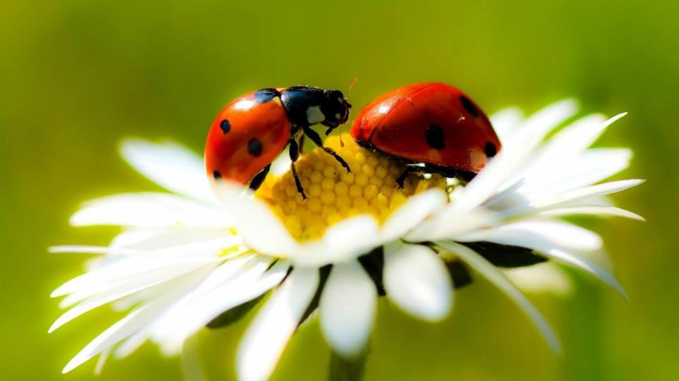 The Ladybug .... Enjoy a gallery!! (1/4)