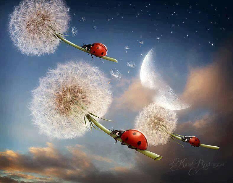 The Ladybug .... Enjoy a gallery!! (3/4)