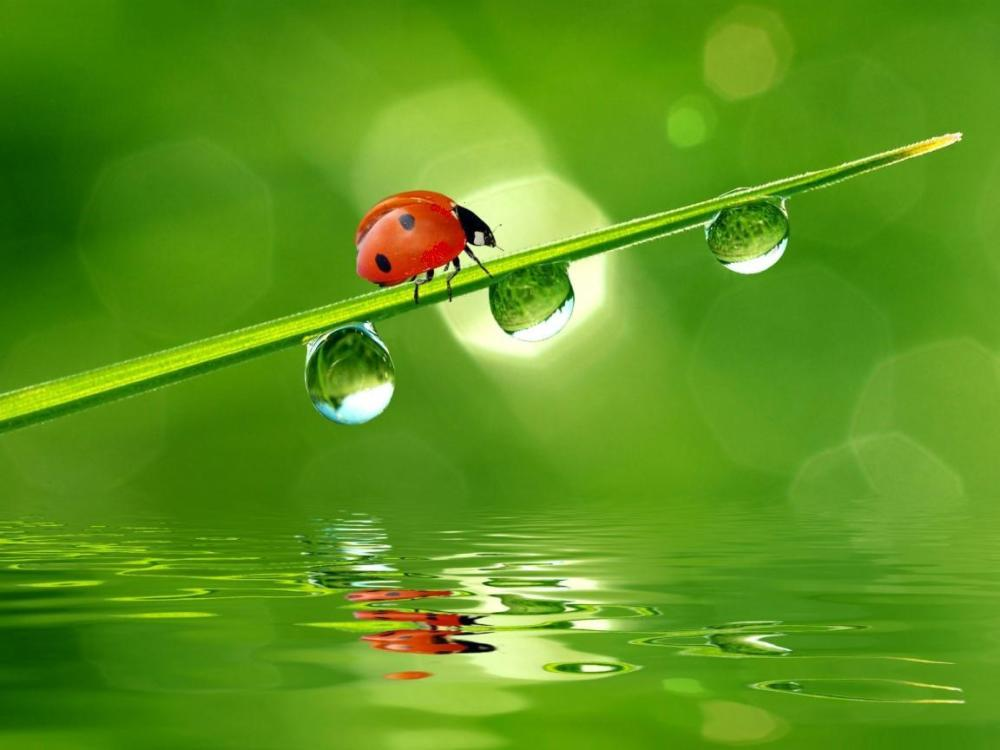 The Ladybug .... Enjoy a gallery!! (2/4)