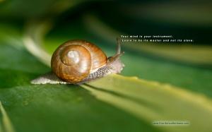 Snail - Meditation Master
