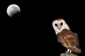 MoonOwl