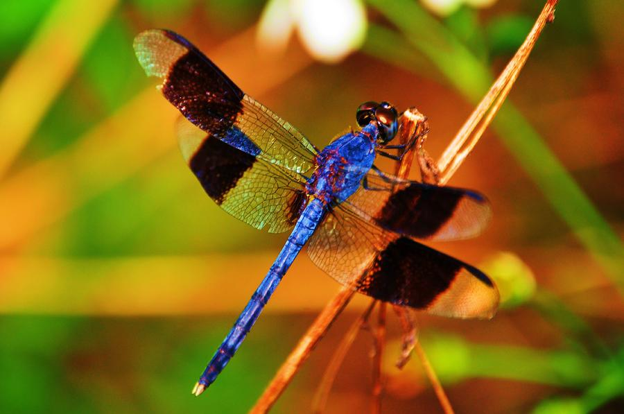 The Dragonfly Enjoy A Gallery It Is What It Is