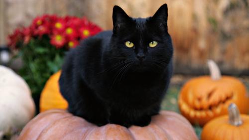 black-cat-on-pumpkin
