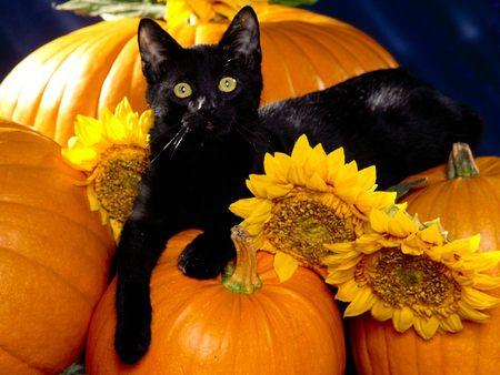 black-cat-on-pumpkins