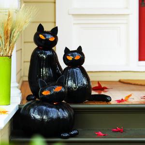 blackcat-cats-m