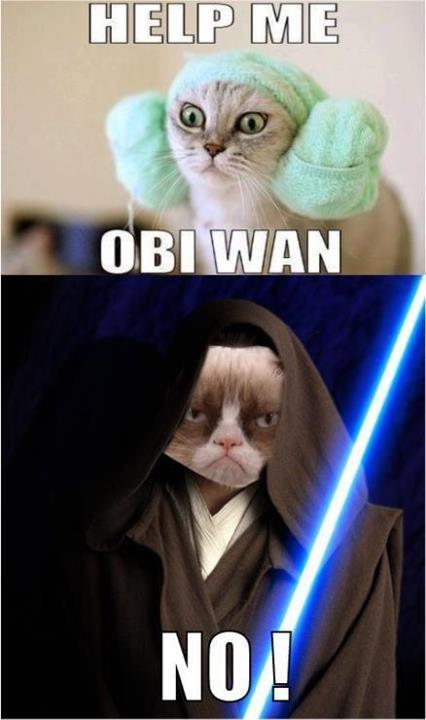 cat-cats-Star-Wars-StarWars-620302