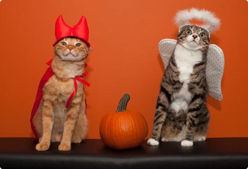 Cats_Halloween