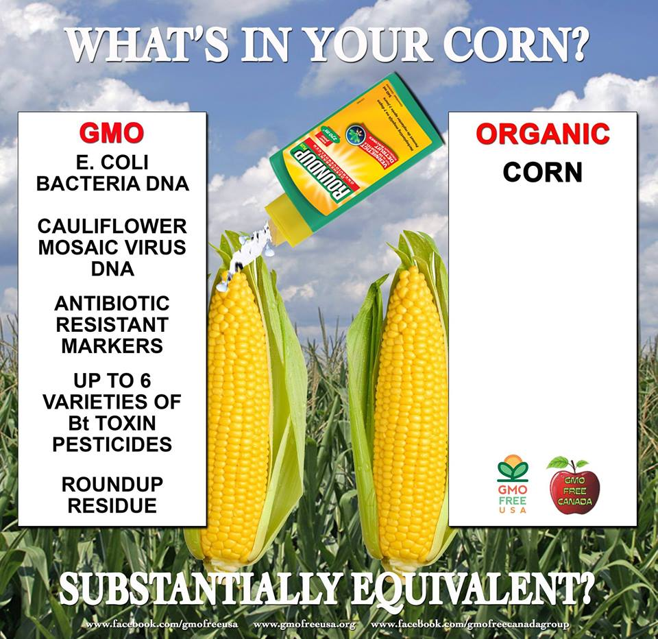 gmo corn Adoption of genetically engineered crops in the us the tables below for corn adoption of genetically engineered crops in the us.