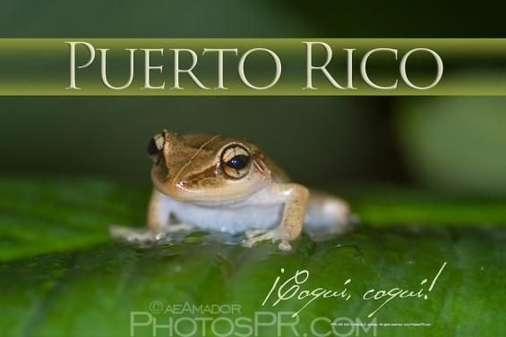 PPR-106 Poster El Coqui de Puerto Rico