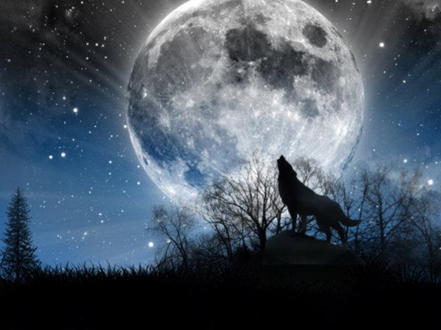 Moon Moon Wolf