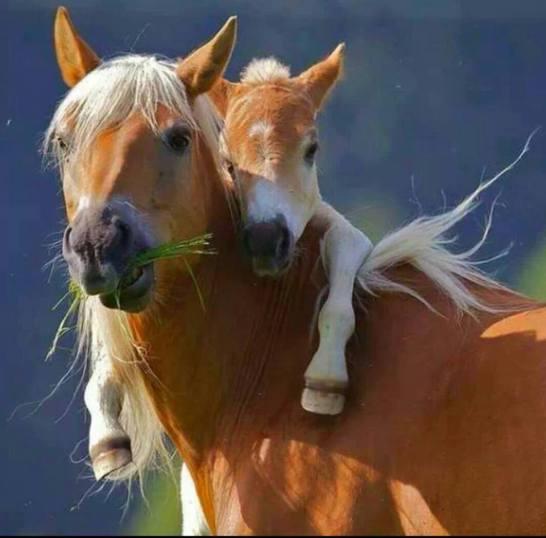 HorseMom