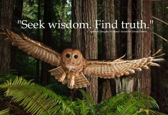 OwlWise