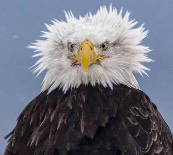 EagleHair