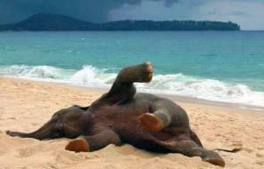 ElephantOcean