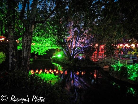Festival of Lights (11 of 1)