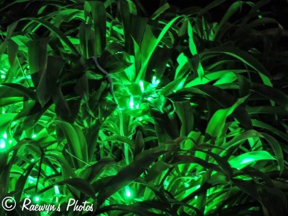 Festival of Lights (16 of 1)