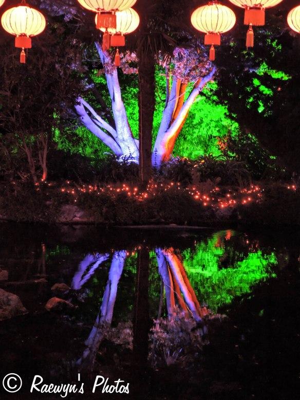 Festival of Lights (2 of 1)